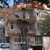 325 yıllık Ağaç 4 Katlı Binanın İçinden Geçiyor haberi
