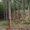 Belgrad Ormanı'nda Ağaçlar Demiryolu İnşaatı İçin İşaretlendi