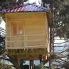 Çam ağacının dalına ev yaptı