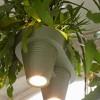 Bitkilerle Çalışan Işık Kaynağı Tasarlandı