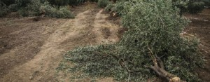 Soma'da Kömür Ocakları ÇED'den Muaf Tutuldu