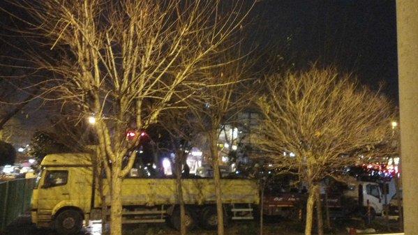 Beşiktaş'ta Gece Yarısı Ağaç Kesimi