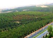 Amaç ODTÜ Ormanını Halka Halk Ranta Açmak