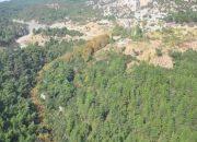 Çayyolu'ndaki Orman Alanı Yapılaşmaya Açılıyor