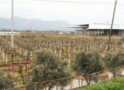 Manisa Ilgınköy Merası kentsel dönüşüm alanı ilan edildi!