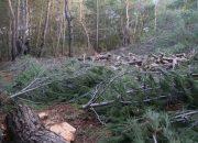 Urla'da da Ağaç Acısı Çekmeyelim