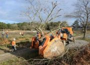 Türkiye'nin En Büyük Ağaç Taşıma Operasyonu