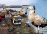 İş Makineleri Girdi, Ağaçlar Kesildi ve Kuşlar Gitti