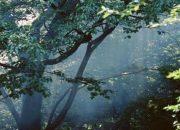 Ölü Bilirkişiyle Orman İmara Açıldı