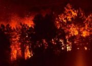 Sürmene'de Büyük Orman Yangını