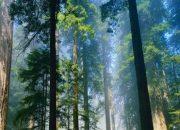 Ağaçlar için Yol Güzergahı Değiştirildi