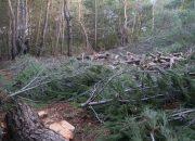 Urla Ovacık'ta Yürütmeyi Durdurma Kararı