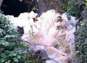 Validebağ Deresi Kirletiliyor, Kasıtlı Olarak Önlem Alınmıyor