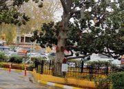 Zeki Müren'in Güzel Manolya'sı Otopark Yıktırdı