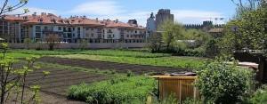 Yedikule Bostanlarında Halk Sadece Yeşillik İstiyor