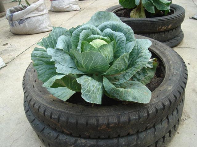 Yeryüzü Derneği'nin Kent Bahçeleri Başvuruları Başladı